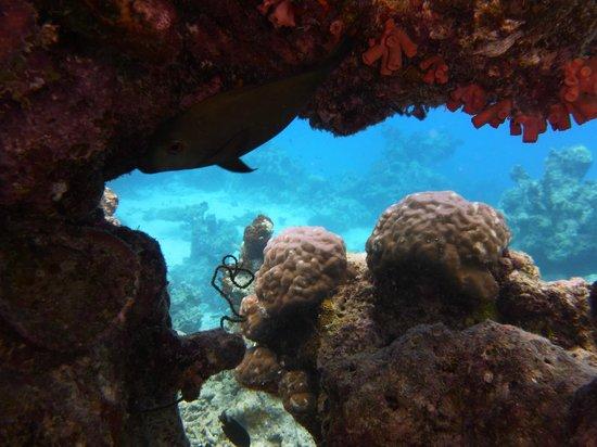 Asdu Sun Island: scorcio di fondale e barriera corallina