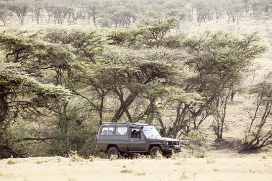 Narok, Kenia: The Mara Naboisho Conservancy - Game drive