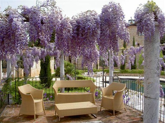 Castello delle Serre: Wisteria in Bloom at Spring