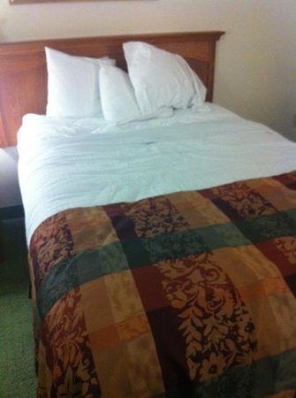 BEST WESTERN Charleston Inn: our bed was clean and firm