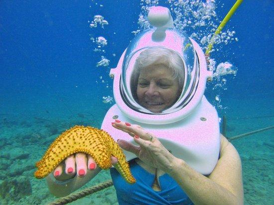 49027817b2c Bren enjoyed the starfish - also a sea urchin - Picture of Sea Trek ...