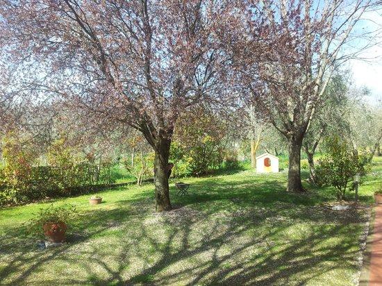 I Sicomori : Il giardino