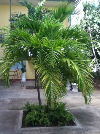 Bananaquit Apartments: Beautiful tree
