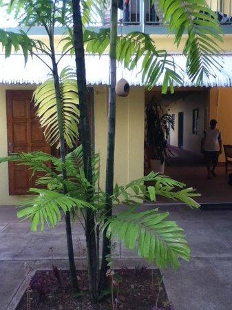 Bananaquit Apartments: Entrance tot he pool