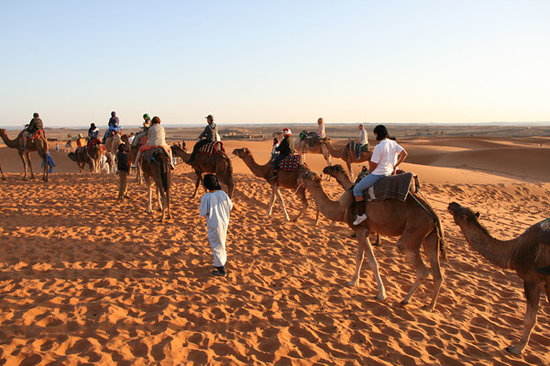 Marrakech Camel Trips - Day Trips