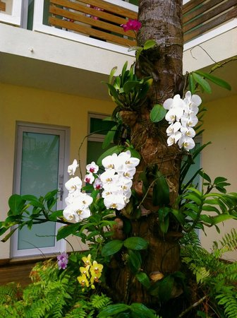 La Playita: Orchids growing on palm trees in courtyard