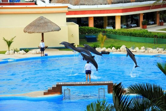 Grand Bahia Principe Tulum : Dolphins from our balcony view in villa 32
