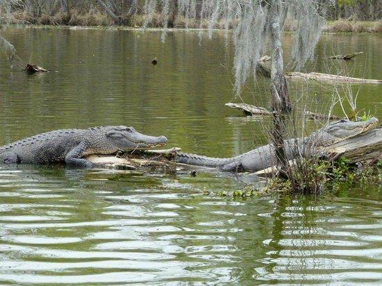 LeBlanc Swamp Tours: LeBlanc Swamp Tour