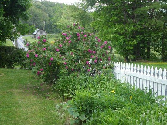 Meadowsweet Gardens Inn: front border garden