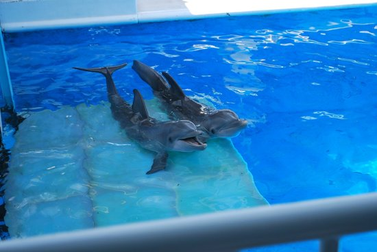 Clearwater Marine Aquarium: Winter on the right