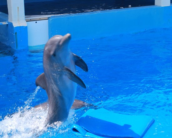Clearwater Marine Aquarium: Dolphins playing