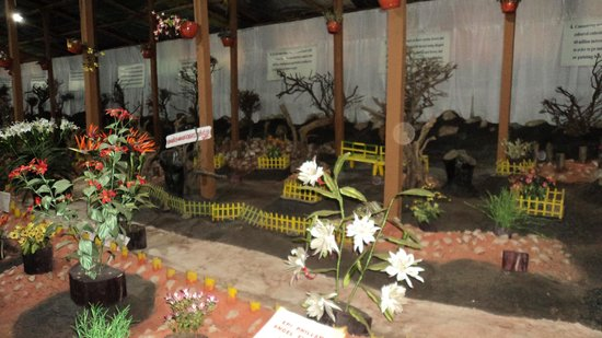 Best ideas about Indoor Zen Garden on Pinterest   Indoor courtyard   Interior garden and Zen garden design