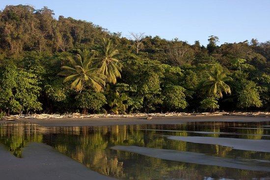Refugio Nacional Mixto de Vida Silvestre Romelia: Playa grande