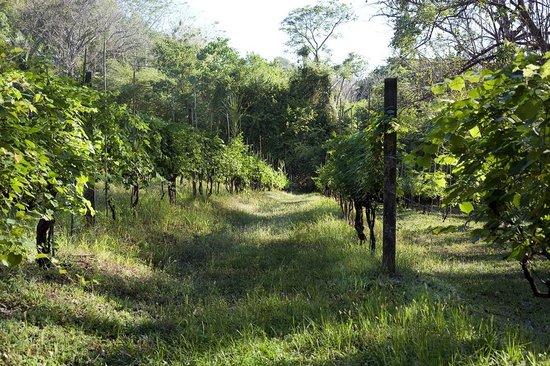 Refugio Nacional Mixto de Vida Silvestre Romelia