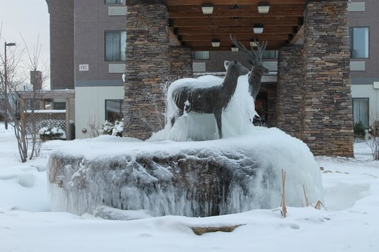 La Quinta Inn & Suites Boone: View of icy deer from the hotel opposite to ours
