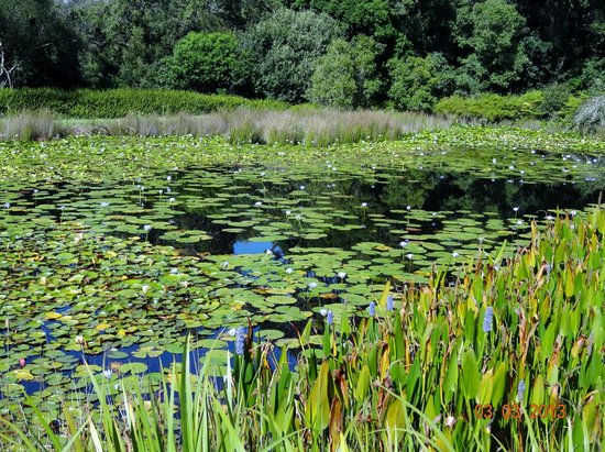 Lily Pond Country Lodge: Lily ponds