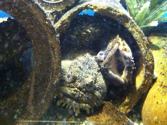 Woods Hole Science Aquarium : Woods Hole Aquarium