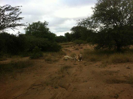 Elandela Private Game Reserve 사진