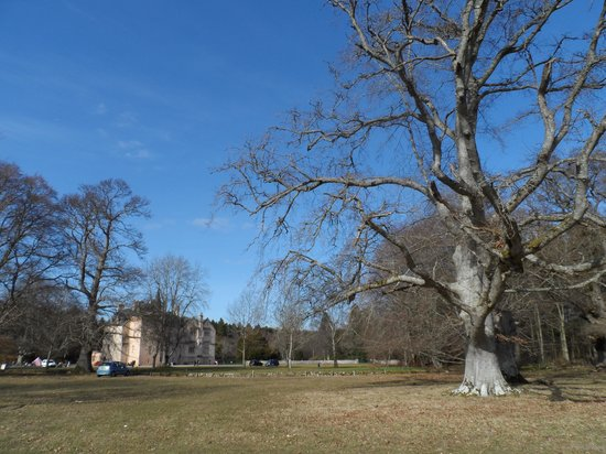 Brodie Castle: lovely grounds