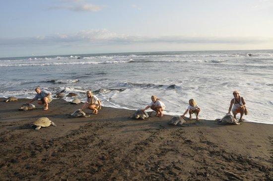 7be0e00f2 Arribada - Picture of Costa Rica EZ Travel Adventures, Playa ...
