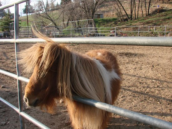 Serendipity Ranch Bed and Breakfast: One of the four miniature horses