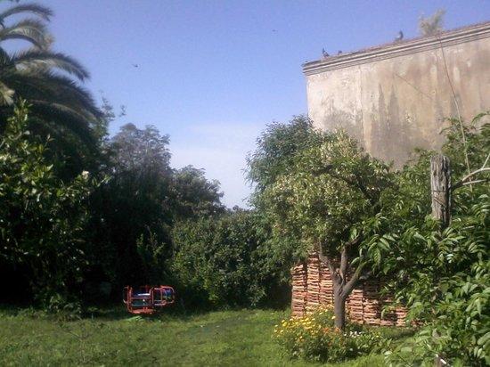 Hostal Don Mateo: Parque, palomar y palmeras.