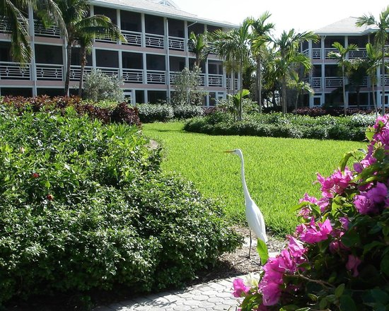 Ocean Club West: OCW grounds & buildings