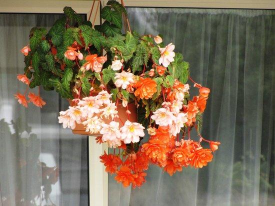 Earnslaw Lodge: flowers