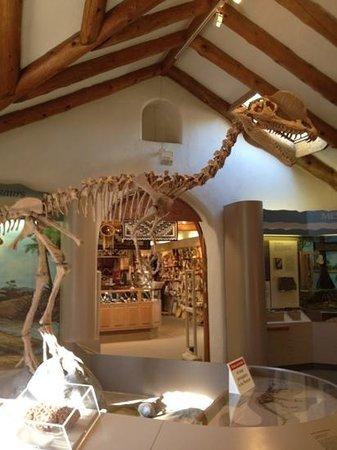 Museum of Northern Arizona: Giant skeleton :)