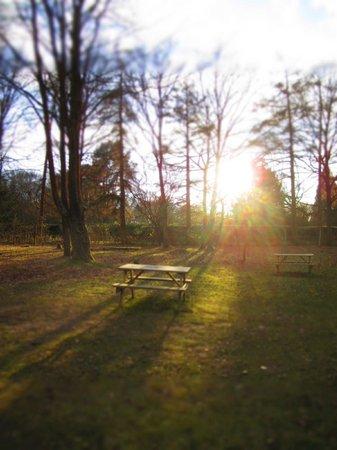 YHA Holmbury St Marys Surrey Hills: picnics and sunsets