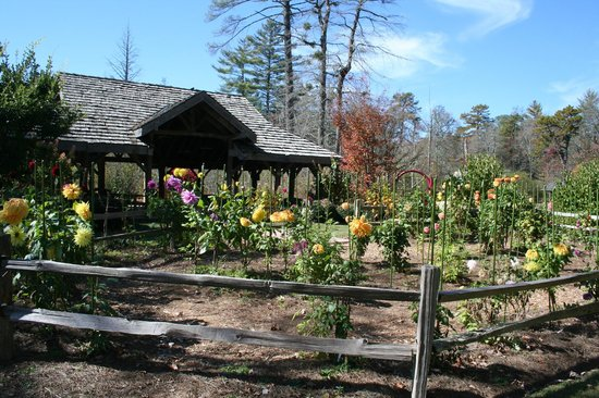 The Village Green is home to a nationally recognized dahlia garden