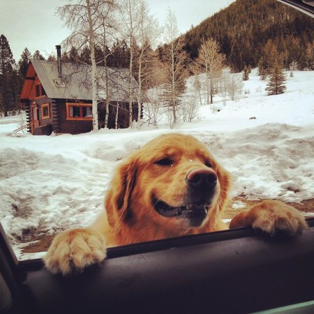 Pioneer Guest Cabins: Leaving the cabins, greeted by a neighboring pup