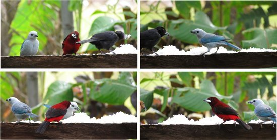 Aprovaca (The Orchid Nursery & Conservation Center) : selection of birds