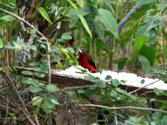 Aprovaca (The Orchid Nursery & Conservation Center) : birds in the garden