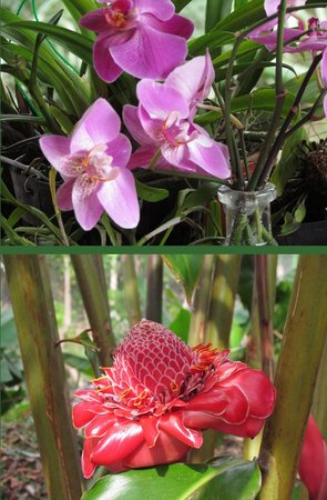 Aprovaca (The Orchid Nursery & Conservation Center) : beautiful flowers