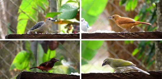 Aprovaca (The Orchid Nursery & Conservation Center) : various birds