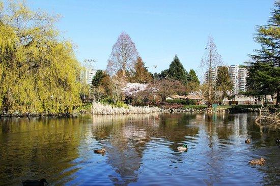 Minoru Park: Lake