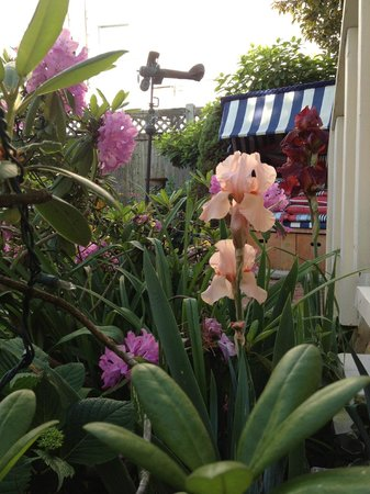 Christopher's by the Bay: The patio in bloom