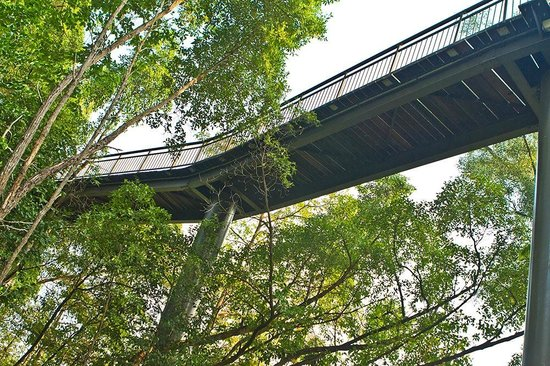The Southern Ridges: Canopy walk
