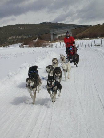 Alpine Adventures Dogsledding: So exhilarating to be going so fast!