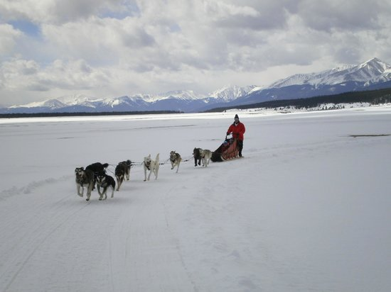 Alpine Adventures Dogsledding: 4.8 miles of fun!
