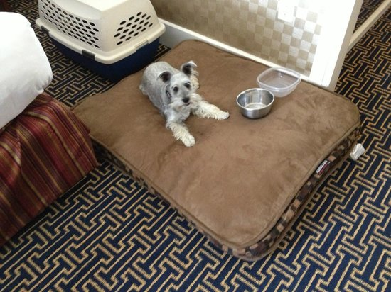 Monaco Baltimore, a Kimpton Hotel: The hotel provided a large dog bed and bowls