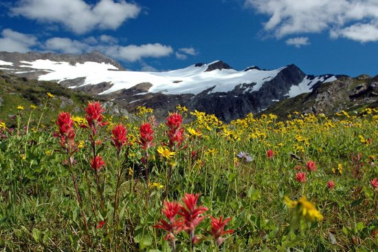 Selkirk Mountain Experience Lodge: Durrand Glacier: Flowers were amazing
