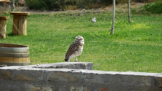 Ampora Wine Tours: one of a family of owls at a vineyard