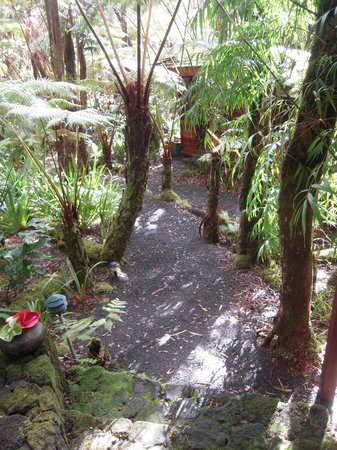 Volcano Rainforest Retreat: Path to our room
