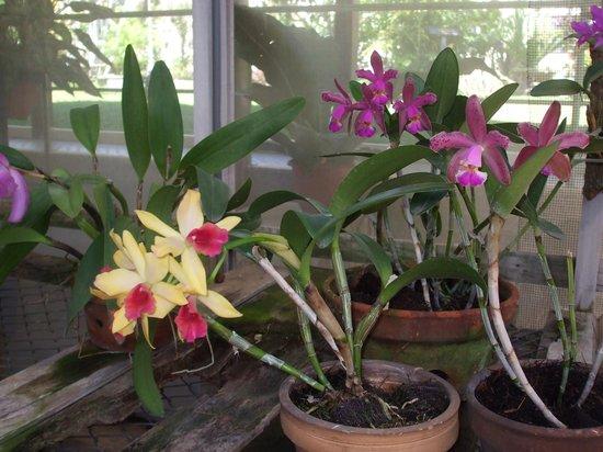 Wyndham San Jose Herradura Hotel & Convention Center : Orchids in the hothouse at Wyndham