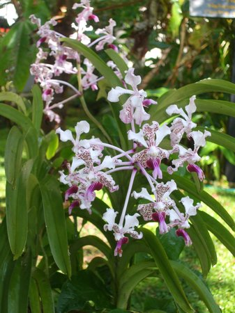 Wyndham San José Herradura Hotel and Convention Center: Orchids on the grounds of the hotel
