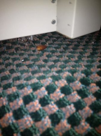 Hampton Inn Kansas City/Shawnee Mission : a leftover almond found in my room at check-in