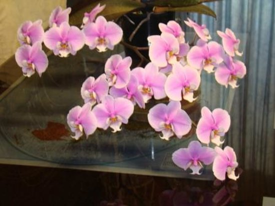 Orchid Guest House: Orchid 2