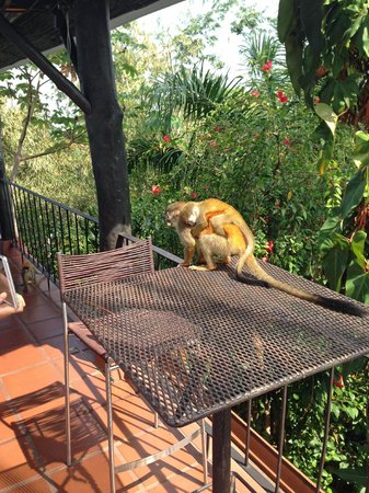 La Mariposa Hotel: Squirrel Monkeys